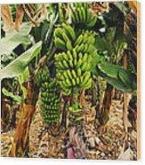 Banana Tree Wood Print
