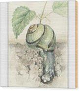 Banded Garden Snail  Wood Print
