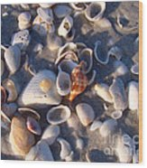 Banded Tulip Wood Print