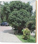 Banju Plants Indian  Wood Print