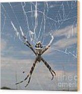 Banna Spider Wood Print