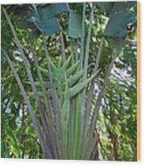 Bannana Palm Wood Print