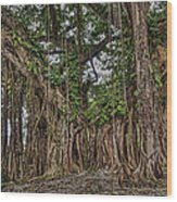 Banyan Tree At Folly Wood Print