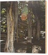 Banyan Tree Park Wood Print