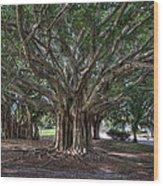 Banyan Tree Reaching For The Sky Wood Print
