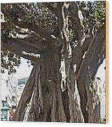 Banyan Trees In Velez Malaga's Parque De Andalucia Wood Print