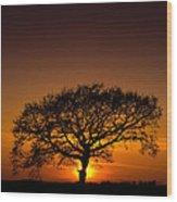 Baobab Wood Print
