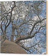baobab from Madagascar 9 Wood Print