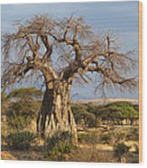 Baobab Tree Ruaha Np Tanzania Wood Print