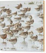 Bar-tailed Godwit 19 Wood Print