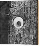 Barb Wire Insulator 3 Wood Print