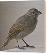 Barbados Bullfinch Wood Print