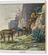 Barbary Ape Wood Print