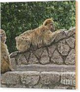 Barbary Macaques Wood Print