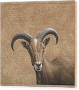 Barbary Ram Wood Print