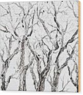 Bare Branches Print Option 2 Wood Print