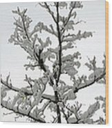 Bare Branches With Snow Wood Print
