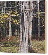 Bare Wood Print