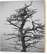 Bare Cypress Wood Print