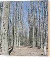 Bare Forest Wood Print