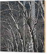 Bare Wood Print by Joanna Madloch