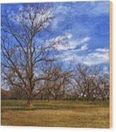 Bare Pecan Trees Wood Print