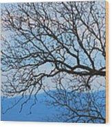 Bare Tree Against Blue Sky Wood Print
