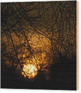 Bare Tree Branches With Winter Sunrise Wood Print
