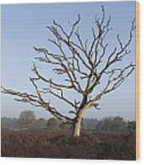 Bare Tree In Forest Wood Print