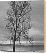 Bare Tree On A Wintery Tahoe Shoreline Wood Print