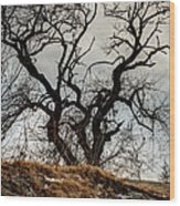 Bare Tree On The Hill Wood Print