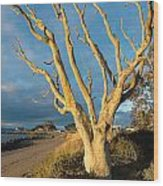 Bare Tree On The Spit Wood Print