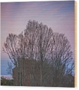 Bare Trees And Autumn Sky Wood Print