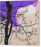 Bare Winter Branches Wood Print by Michael Sokalski