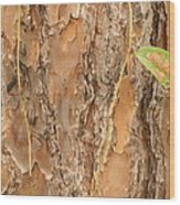 Bark 1 Wood Print