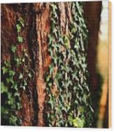 Bark And Ivy Wood Print by Jacqui Collett