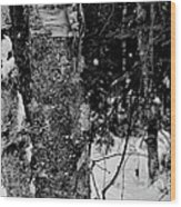 Bark And Trees In Winter Wood Print