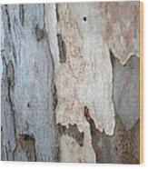 Bark Of A Eucalyptus Tree Wood Print