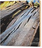 Bark Texture Wood Print