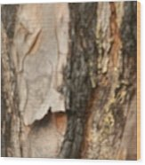 Bark X Wood Print