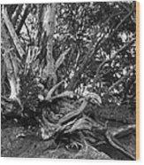 Barking Crab Wood Print