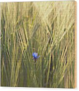 Barley And Corn Flowers In The Field Wood Print