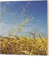 Barley And Oat Vertical Hdr Wood Print