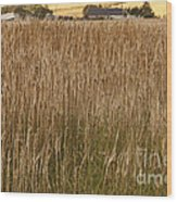 Barley Field Wood Print