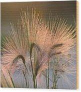 Barley  Wood Print
