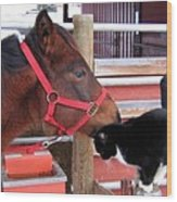 Barn Buddies Wood Print