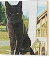 Barn Cat Pose Wood Print