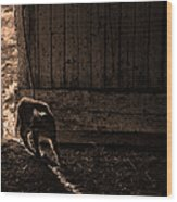Barn Cat Wood Print by Theresa Tahara