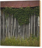 Barn Eyes Wood Print