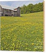 Barn In Dandelion Field Wood Print